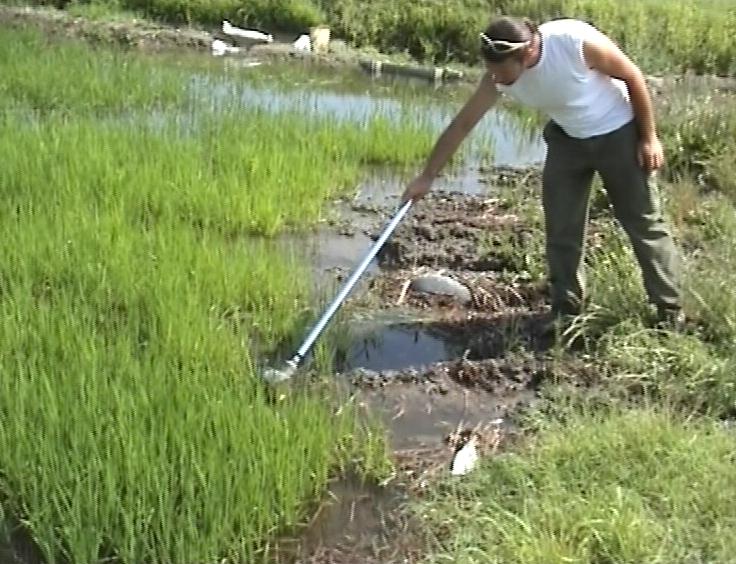 Attività di monitoraggio nei focolai di sviluppo larvale con campionamento di larve di zanzara