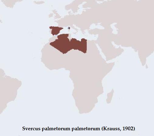 Distribuzione di Svercus p. palmetorum