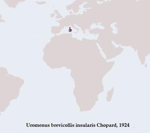 Distribuzione di Uromenus b. insularis